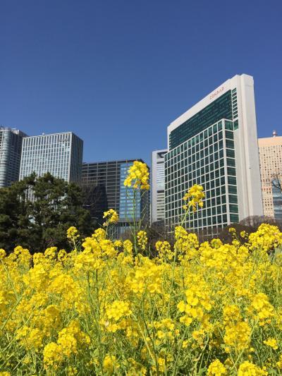 大都会の真ん中で菜の花の海が・・・ここは浜離宮庭園(*^▽^*) ご近所には築地市場が。だ・か・ら・今日のランチは(*・▽・*)