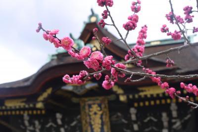 梅と椿の着物花めぐり*2016早春京都旅