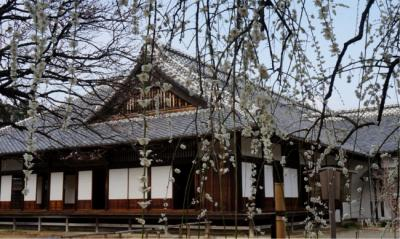 2016水戸の梅 後半 素敵な花景色いっぱいの弘道館
