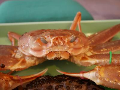 青春18きっぷで蟹を食べに行こう!