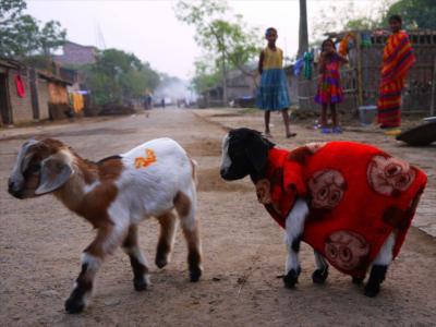 インド北東部と中部の旅5●マルダタウンでベンガルの田舎を満喫