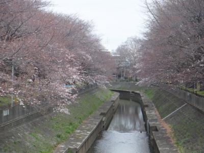 2016年桜鑑賞①