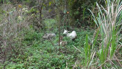 ベトナムは毎日どんより曇ってた その9 山羊の島を一巡り(後編)