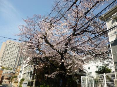 東京散歩♪ vol.33 恵比寿・・・桜・桜・桜・・・♪