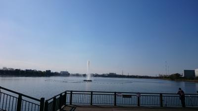 お散歩道・久喜菖蒲公園・足に優しい in埼玉県・久喜