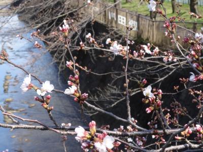 桜は最高に癒されますね!