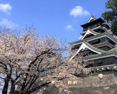 2016年熊本城でお花見
