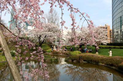 東京桜散歩 (六本木界隈) ・・・