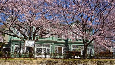 桜満開の王子動物園 下巻