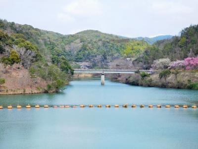 2016年 山口・宇部市 今富ダム湖畔桜見ウォーキングと楠こもれびの郷の温泉に入りました。