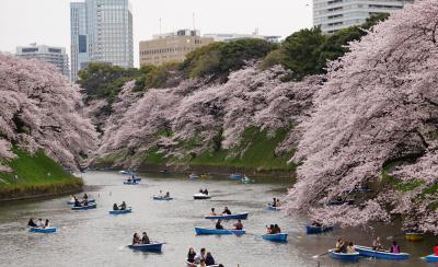 桜まつり 千鳥ヶ淵