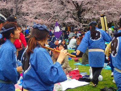 「武蔵野桜堤」の桜と「都立小金井公園」桜まつりを観る
