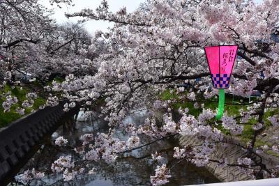 桜街道・五条川を溯る