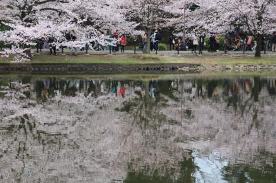さいたま市 大宮公園  満開の桜に満開の笑顔!!