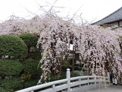 埼玉 / 花より団子♪ ~ほんの少しの桜とお食事会~
