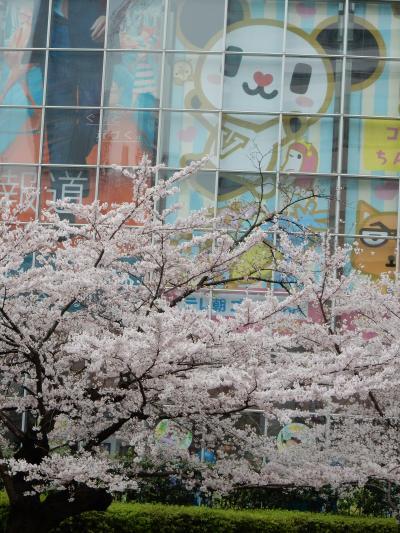 桜散歩2016~六本木~