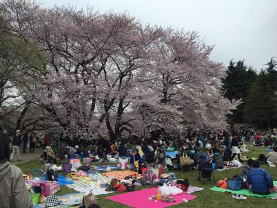 2016年「東京の桜」