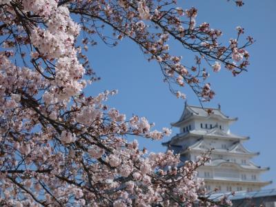 白鷺城(姫路城)の桜満開