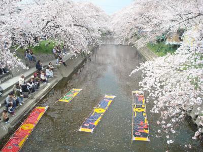 「岩倉」五条川の桜