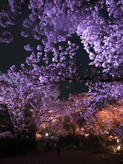 福岡城址 舞鶴公園 桜満開