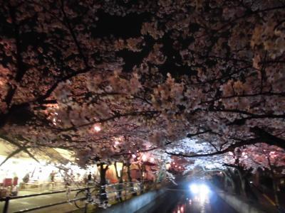 四日市の夜桜鑑賞