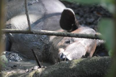 乾季のコルコバード国立公園はいろんな動物がいっぱい