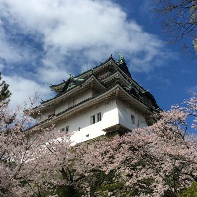 満開の桜2016@和歌山城と紀三井寺