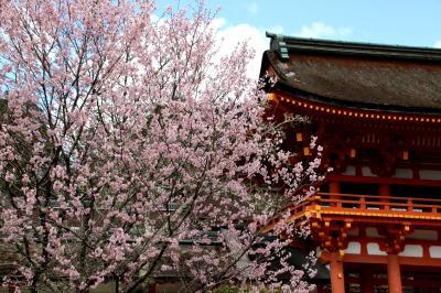 賀茂川から上賀茂神社へ