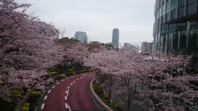 春の大江戸線 桜巡り2016