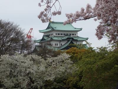 桜に引かれて名古屋城をひとめぐり。満開でした。