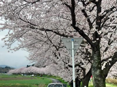 嵐山渓谷と都幾川の桜堤