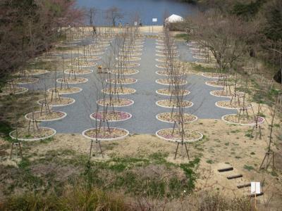 桜の迷宮で・・・?