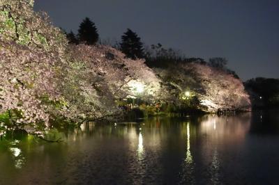 2016井の頭公園の桜~散り始め
