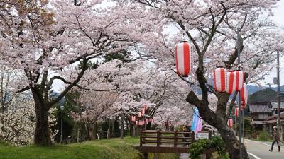 丹波篠山の花見(4) 水分れ公園の桜も満開でした。