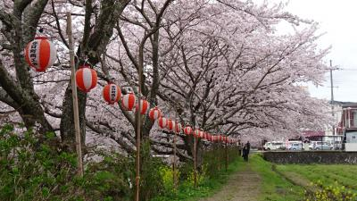 丹波篠山の花見(5) 黒井川桜堤の観桜。