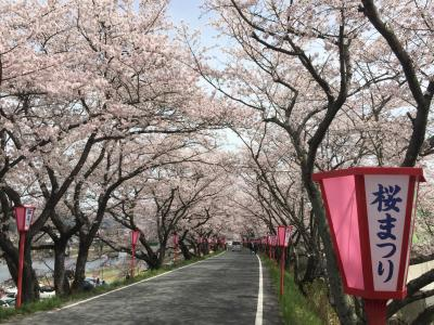 仕事で真庭へ。時間があったので桜を鑑賞。