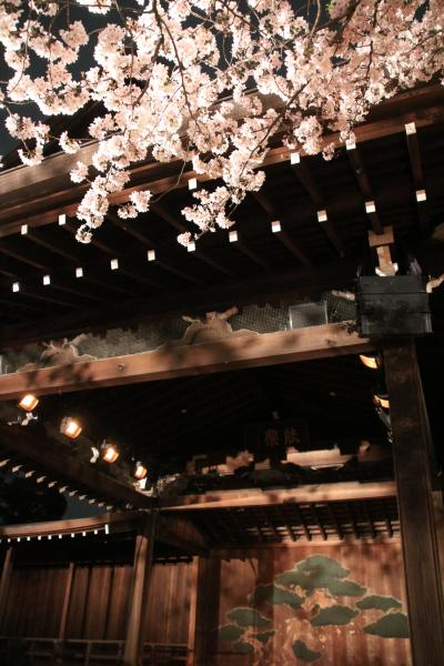 靖国神社の夜桜能は人の目には満開の桜の下で&ライトアップのない千鳥ヶ淵