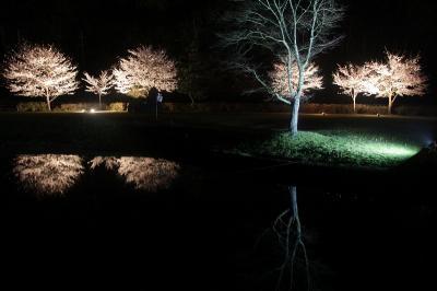 二王公園ライトアップ SAKURA`京都丹波高原国定公園`  -現在閉園中-