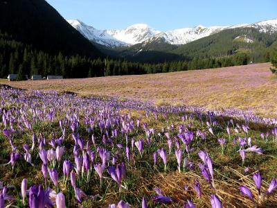 団塊夫婦のポーランド&スロバキアドライブ旅行ー(2)クロッカスの咲く谷から残雪のタトラ山地稜線へ