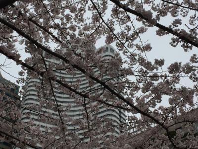 東京桜巡り<1>