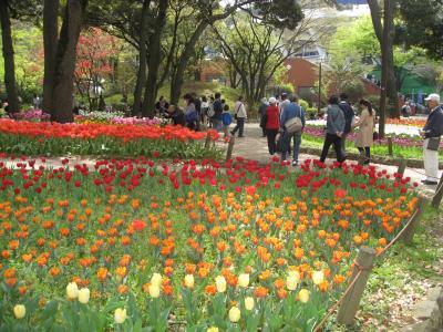 横浜公園のチューリップを見に