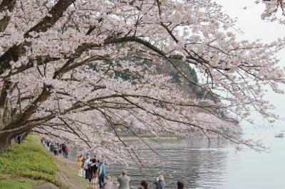 バスツアーで行く 近江のさくら巡り(長浜豊公園・余呉湖・海津大崎)!