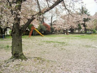 2016年 山口県・宇部市 国道沿いにある公園の桜がきれいだったので寄ってみました