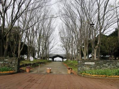 早朝ウォーキングコース沿いに咲く花達・・・⑤久喜菖蒲公園のさくらとウォーキングコースの風景