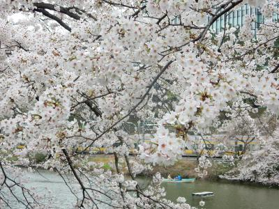 東京2016桜 【10】外堀通り