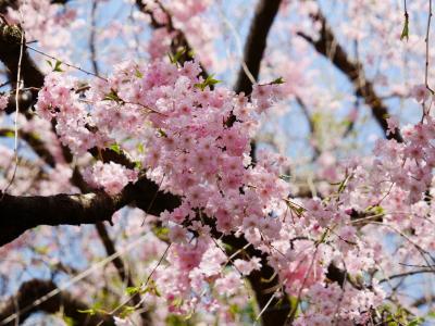妙心寺、春の特別拝観へ♪