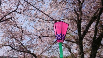 岡山の桜☆井原堤と相原公園と古城山公園で桜を満喫!