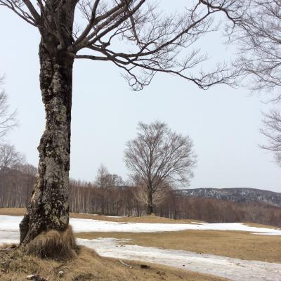 残雪の奥志賀高原☆大好き なバイオリンを聴きながら~雪解けの高原を散歩♪~♪♪
