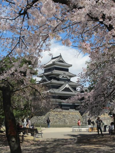 桜三昧の旅 in 松本