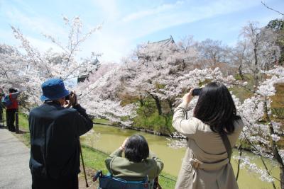 86歳の父と82歳の母を連れて上田城千本さくら祭り~夜桜~海野宿に行ってきました。母は昨年秋の大たい骨の骨折後、初旅行です。その①上田城の満開の桜を楽しみました。